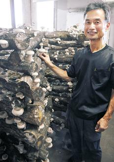 収穫前の原木しいたけを手にする生産者の勝沢さん