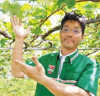 店舗近くにある農園で栽培中のぶどうを紹介する、セブンイレブン八王子館町店の黒沢オーナー