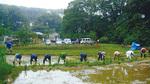 今年6月、里山で田植えをする同法人メンバー=提供写真