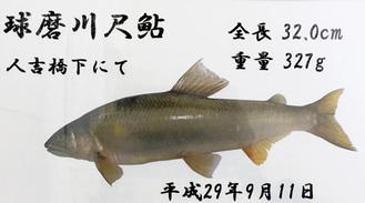 尺鮎釣果の記録