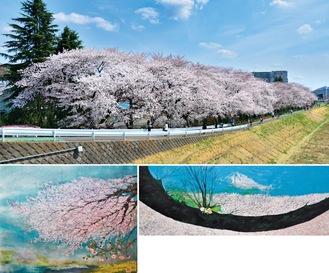 【上】青木訓行さん撮影(2014年)/【左下】萩原さんによる「春爛漫」/【右下】山口さんによる「桜の海と胴ぶきの桜」
