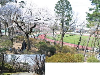桜が咲いた富士森公園の様子。上写真の奥に見えるのが新しくなった競技場=21日撮影