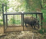 「野生獣」窓口を一本化
