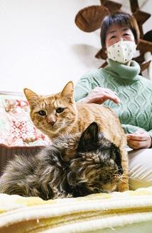 保護している猫たちと野下さん