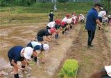 泥んこ田植え体験