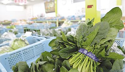 冬野菜大売出し