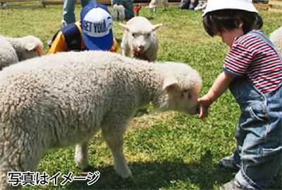 ヤギやヒツジと触れ合える