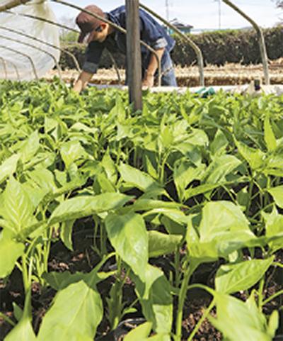 野菜苗植木祭り開催