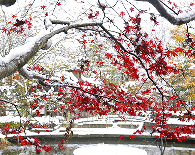 秋と冬の共演
