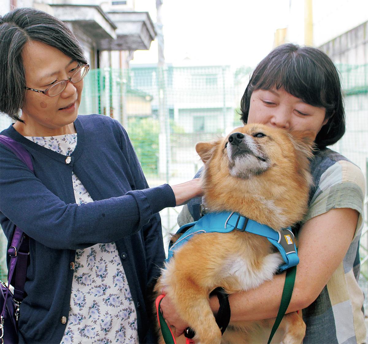 行き場ない犬と「家族」繋ぐ
