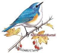 色鉛筆で野鳥を描こう