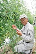 多摩市産の「健幸トマト」販売開始