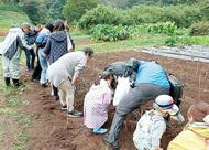 落花生・芋掘り、新鮮野菜も