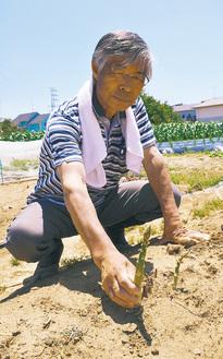「まだまだ始めたばかり」とアスパラガスを収穫する小暮さん