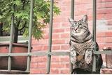 「世界のネコ」写真展