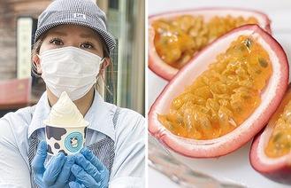 【左】パッションフルーツ味のアイスを持つスタッフ/八王子で栽培されているパッションフルーツの画像