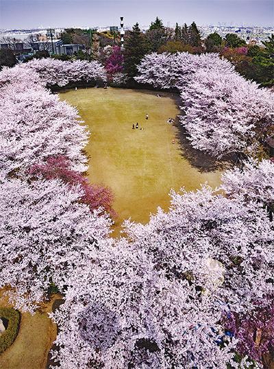 京王沿線の桜 30点
