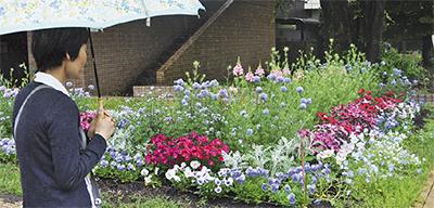 校内花壇を公開
