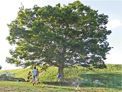 「つどいの木」残すために