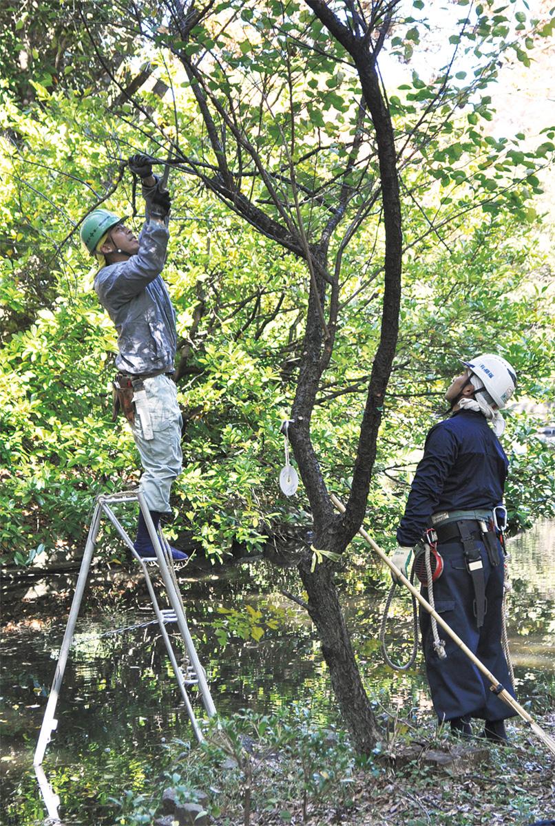 瓜生緑地の景観維持へ