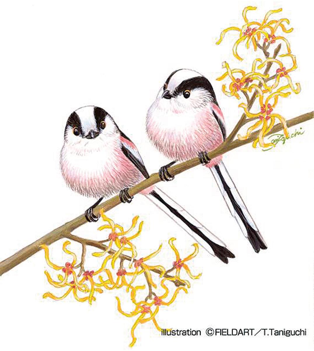 野鳥の絵を楽しく描こう