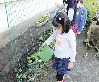 苗に水をやる西鶴間小の児童