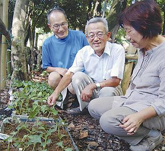 泉の森でアジサイを育てる伊藤さん(中央)