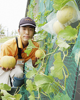 本格的な編目模様も入った果実は収獲間近