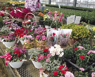 種類豊富な花は母の日に人気