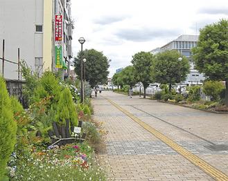 7月いっぱいで見納めとなる東側プロムナードの花壇と樹木