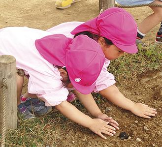 たねダンゴを植える園児