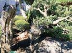 倒木被害も数多く見られた
