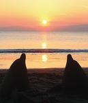 2頭の間を夕日が沈む