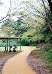 宇都宮記念公園は、中央林間駅北口から約1Km。園内の「みどりの森」と「緑野公園」は日・水・土・祝祭日・9月24日の午前9時から午後5時のみ開園。ひのきの散歩道、仲よし広場は常時開園
