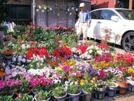 笑顔咲く花の家