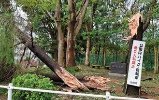 多くの倒木があった昨年の台風15号
