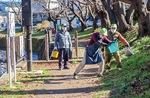 桜への施肥作業の様子
