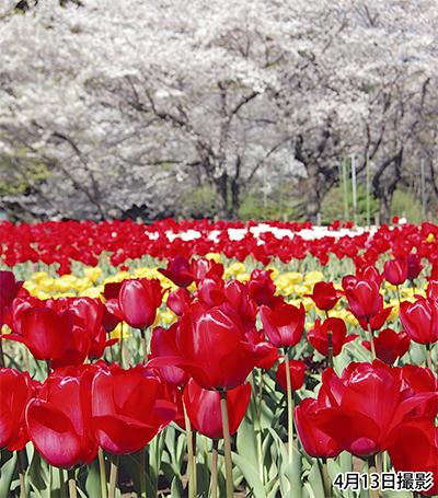 花咲く春を満喫