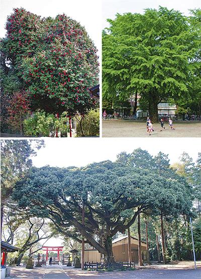 「名誉の木」市民投票で決定