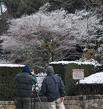 雪の花咲く