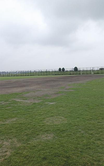緑の芝生が復活へ
