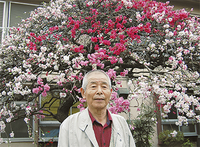4色の桃の花が満開