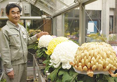 「日本一の菊」を展示