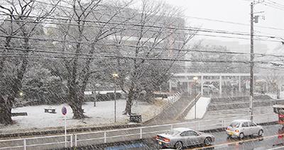 突然の雪景色
