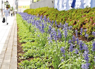 初夏の風に揺れる花