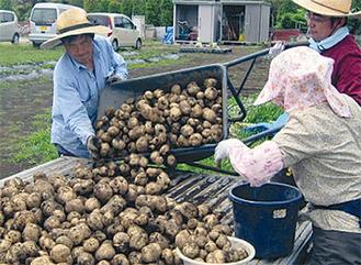 ジャガイモは400kgを収穫した