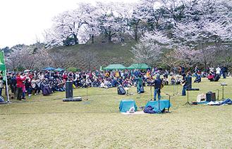 桜と音楽のコラボに期待