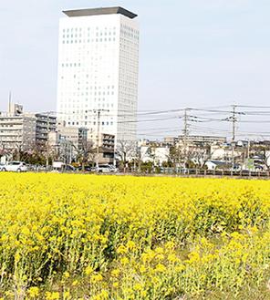 会場は市庁舎北側の花畑
