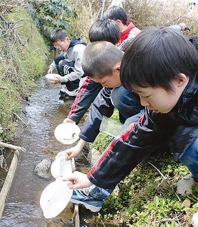 幼虫を放流する児童ら=杉本小学校