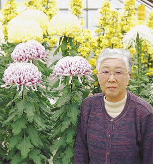 鴨志田さんはハウス内で菊を育てている